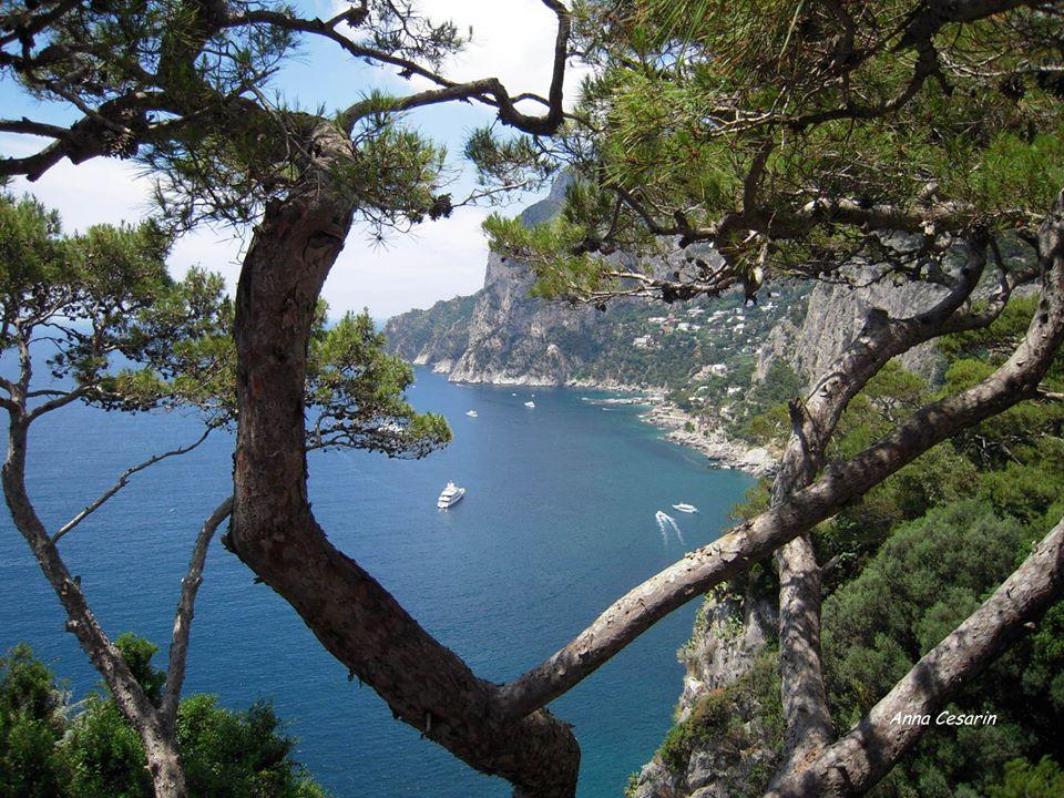 La costa di Capri fra gli alberi